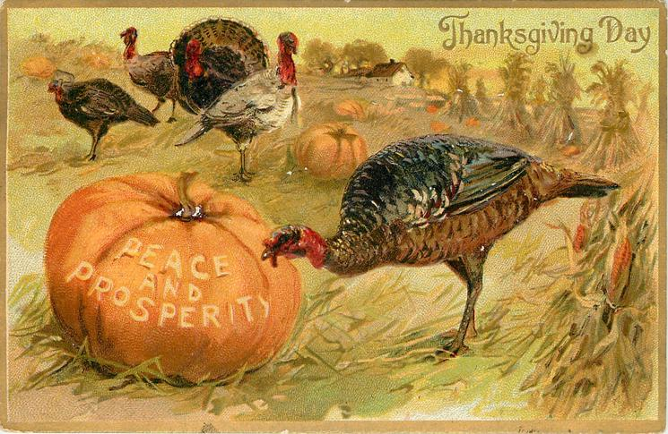 five turkeys in field, one pecks at large pumpkin with PEACE AND PROSPERITY carved on it