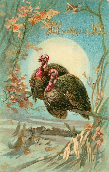 two turkeys sit on branch above pumpkin field, large moon behind