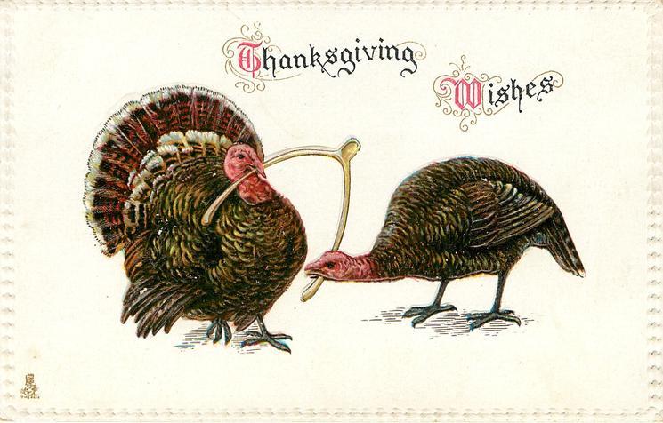 THANKSGIVING WISHES  tom & hen turkeys pulling each end of wishbone