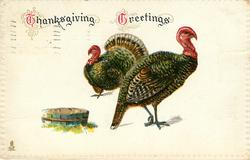 THANKSGIVING GREETINGS  fat tom turkey looking left, thinner hen in front looking right, tub lower left