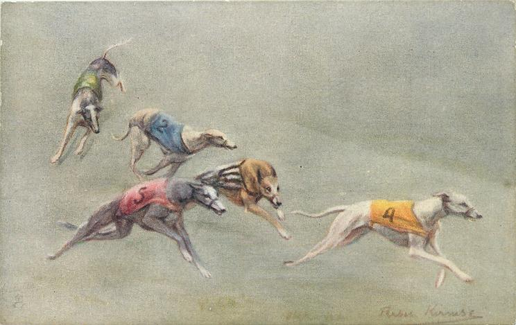 five dogs racing, yellow no.4 in lead