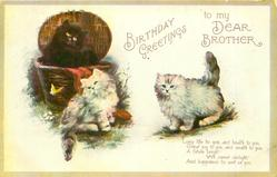 BIRTHDAY GREETINGS  TO MY DEAR BROTHER  three cats, one in basket, look at butterfly