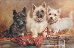 SCOTLAND FOR EVER  one black & two white scotch terriers, on tartan covered bench