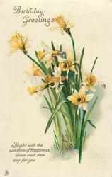 BIRTHDAY GREETINGS  daffodils