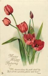 MANY HAPPY RETURNS  tulips