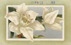 A JOYFUL EASTER  white lilies