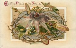 EASTER PEACE BE YOURS  crown of thorns with passion flower and pods