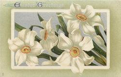 EASTER GREETINGS white narcissi with yellow and red middles and silver background