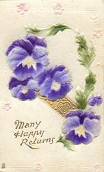 MANY HAPPY RETURNS  pansies