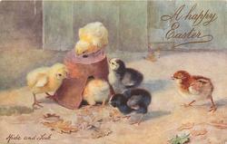 HIDE AND SEEK six chicks, one tries to get under broken flower pot