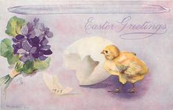 violets left, chick walks left in front of egg