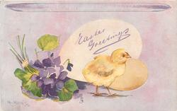 violets left, chick walks right in front of two eggs