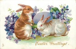 EASTER GREETINGS  two rabbits, violets, violet EASTER egg back