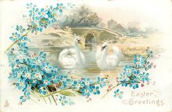 EASTER GREETINGS  two swans on water, bridge behind, blue forget-me-nots around