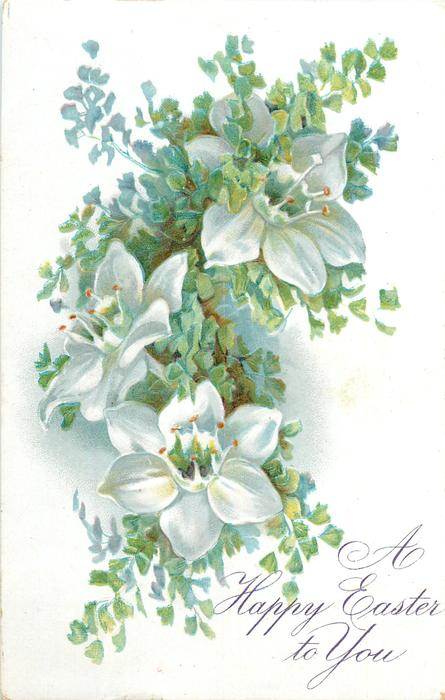 A HAPPY EASTER TO YOU  hellebores, three white blooms among many small green leaves