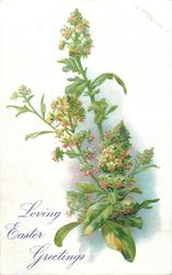 LOVING EASTER GREETINGS  mignonette, green flower with red tinges, four large leaves at bottom