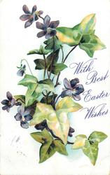 WITH BEST EASTER WISHES  violets & ivy leaves, five purple flowers, one bud, two leaves at bottom