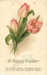 A HAPPY EASTER  tulips