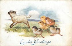 EASTER GREETINGS  four chicks run left, following lamb