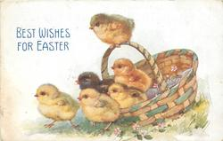 BEST WISHES FOR EASTER  six chicks looking left, old basket right, one on handle