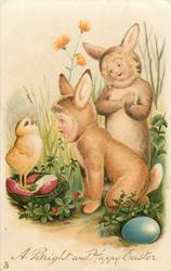 A BRIGHT AND HAPPY EASTER  two children in rabbit costumes admire exaggerated chick