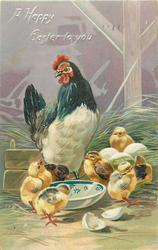 A HAPPY EASTER TO YOU  hen standing behind blue and white bowl, six chicks surround bowl, three eggs & chick behind