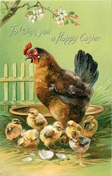 TO WISH YOU A HAPPY EASTER  hen stands in front of large brown bowl, seven chicks in front