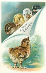 A HAPPY EASTER  brown chick below pulls down flap , four chicks heads above, comes with & w/o clover & daisies