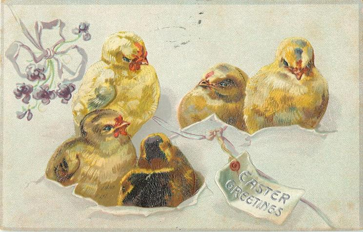 EASTER GREETINGS  five chicks breaking through pale-purple-package tied with pale purple ribbon