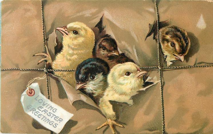 LOVING EASTER GREETINGS  five chicks breaking through brown package, string tied