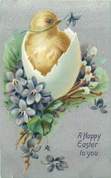 A HAPPY EASTER TO YOU  chick, looks right out of egg in purple violets