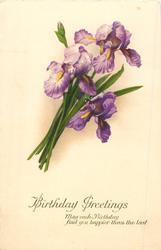 BIRTHDAY GREETINGS  purple iris