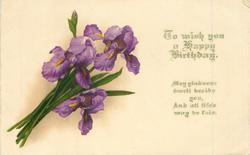 TO WISH YOU A HAPPY BIRTHDAY purple iris