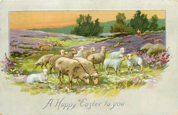 A HAPPY EASTER TO YOU  rural scene with sheep