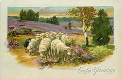 EASTER GREETINGS  rural scene with sheep