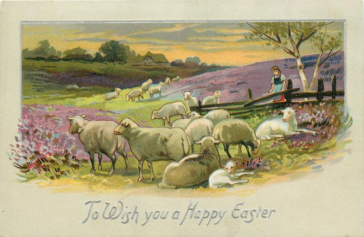 TO WISH YOU A HAPPY EASTER  rural scene with sheep, girl stands behind fence