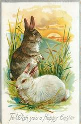 TO WISH YOU A HAPPY EASTER  brown rabbit sits up, white one lies in grass