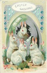 EASTER GREETINGS  four white rabbits, one looks front from silver egg, others look up at it