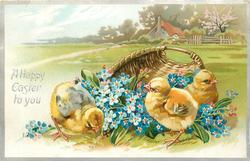 A HAPPY EASTER TO YOU  three chicks & blue forget-me nots in front of basket