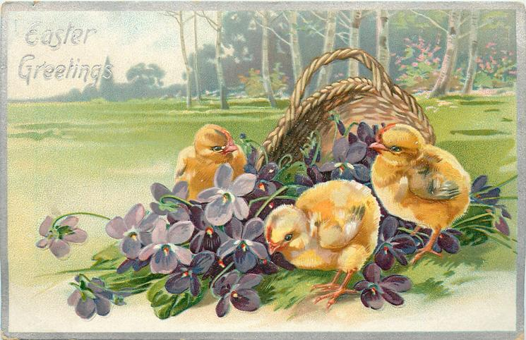 EASTER GREETINGS  three chicks & purple violets in front of basket, church on horizon