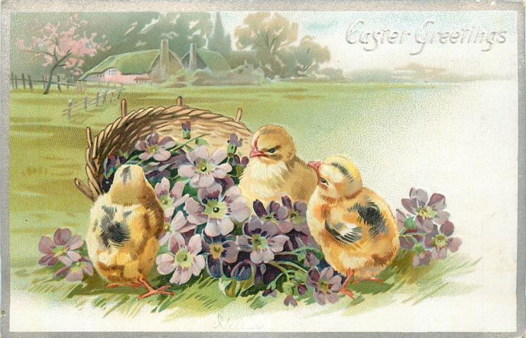 EASTER GREETINGS  three chicks & purple flowers in front of basket, farm buildings far behind, left