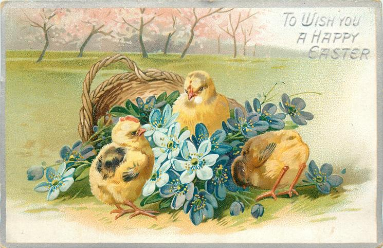 TO WISH YOU A HAPPY EASTER  three chicks & blue flowers in front of basket, blossom trees behind