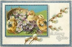 A JOYOUS EASTER  chicks around  purple violets in front of basket, pussy willow in white inner border to right, blue/silver border