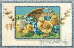 EASTER GREETINGS  three chicks & blue forget-me-nots in front of basket, pussy willow in white inner border, blue/silver border