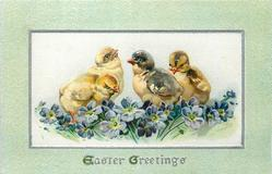 EASTER GREETINGS  four chicks behind purple flowers