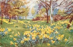 daffodils, trees behind