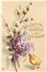 EASTER GREETING AND GOOD WISHES  little yellow chick next to purple pansies and pussy-willows