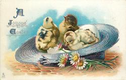 A JOYOUS EASTER  three chicks in blue straw hat, daises