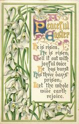 A PEACEFUL EASTER  snowdrops