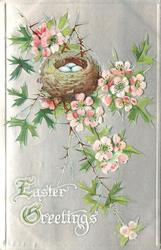 EASTER GREETINGS  nest with eggs in wild rose
